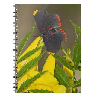 duendecillo Rojo-confinado en el cepillo de Espera Notebook