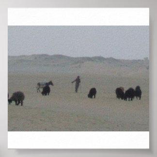 Dueño con sus ovejas en Kuwait Posters
