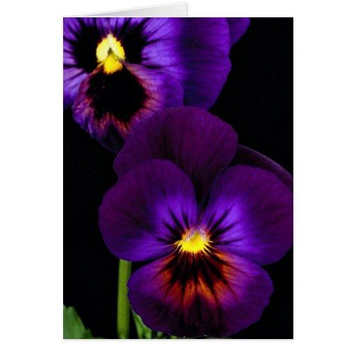 Duet of purple pansies, Washington State Greeting Card