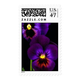 Duet of purple pansies, Washington State Postage