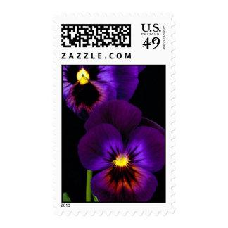 Duet of purple pansies, Washington State Stamps