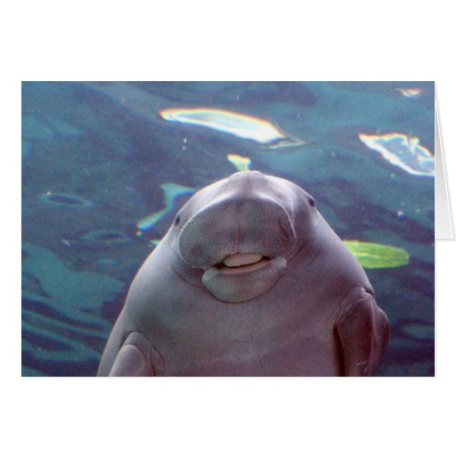 Dugong Greeting Cards