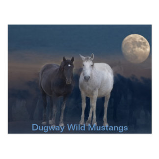 Dugway Wild Mustangs Postcard
