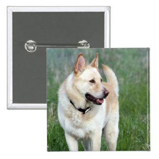 Duke Dog Pins