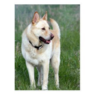 Duke Dog Postcard