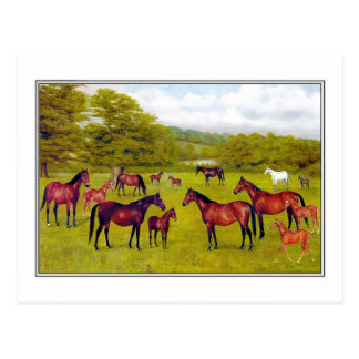 Duke of Westminster s Mares and Foal Post Card