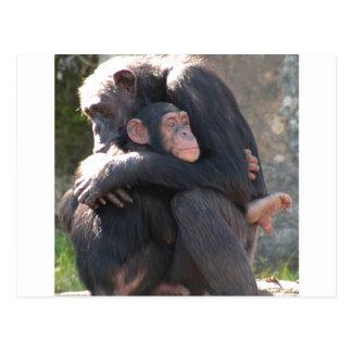 ¡Dulce! Dos chimpancés comparten un abrazo Tarjetas Postales