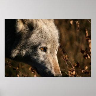 Duma el lobo poster