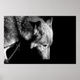 Duma el lobo impresiones