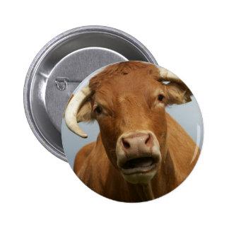 dumb cow pinback button