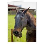 Dumb Horse Card