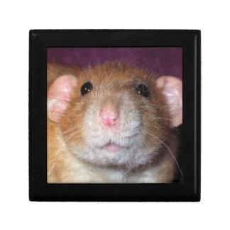 Dumbo Rat Box Jewelry Box
