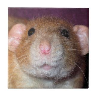Dumbo Rat Tile