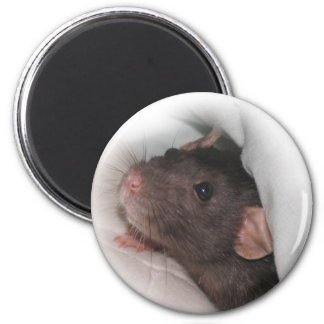 Dumbo rat wanna play? fridge magnets