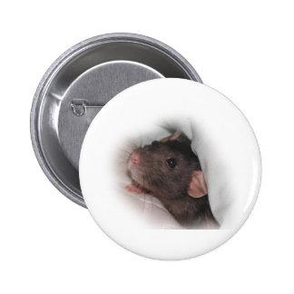 Dumbo rat wanna play? pinback button