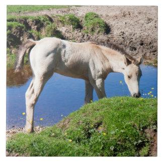 Dun buckskin foal horse Tile