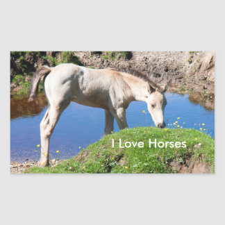 Dun foal horse Stickers