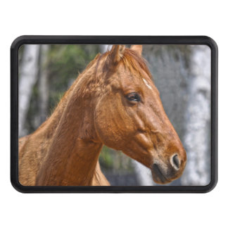 Dun Ranch Horse Face Equine Photo Trailer Hitch Cover