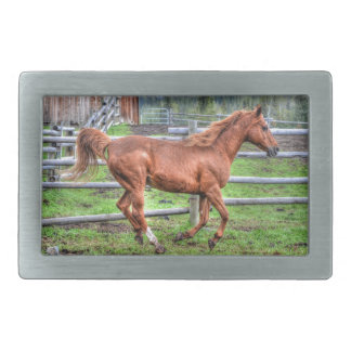 Dun Ranch Horse Pony Animal-lover Photo Rectangular Belt Buckle