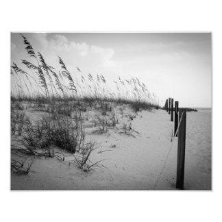 Dunas de arena de la Florida Fotografía