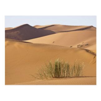Dunas de arena, desierto del Sáhara, Marruecos Tarjetas Postales