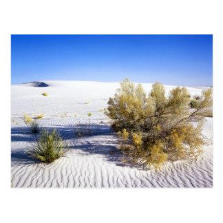 Dunas de arena en el desierto de Mojave, Tarjetas Postales