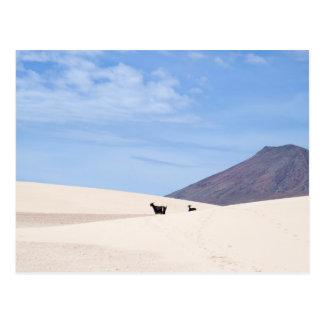 Dunas de Corralejo, Fuerteventura, islas Canarias, Postales