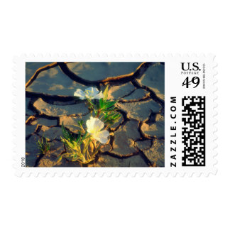 Dune Primrose growing out of Cracked Mud Postage