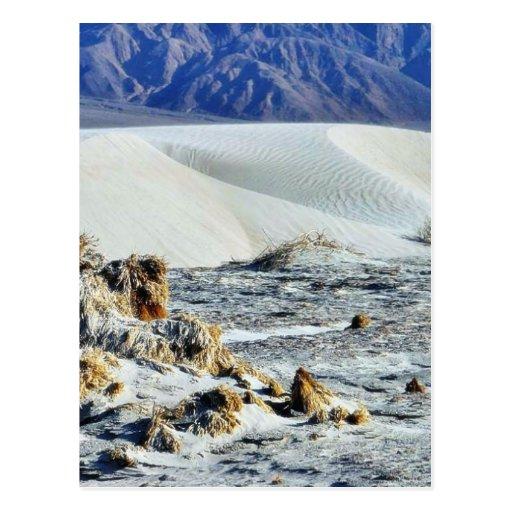 Dunes At Sunset Postcard