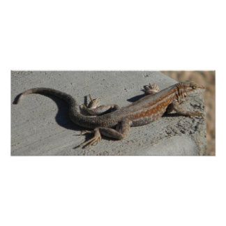 dunes sage brush lizard poster