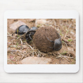 Dung Beetle Mouse Pad