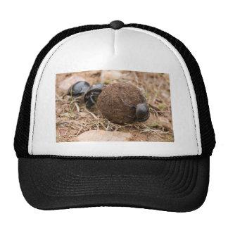 Dung Beetle Trucker Hat