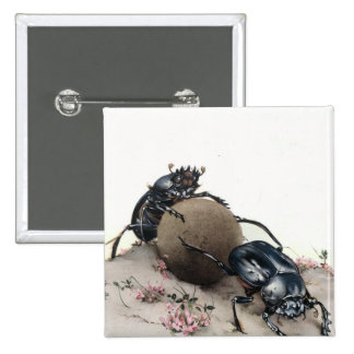 Dung Bettle 2 Inch Square Button