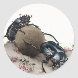 Dung Bettle Classic Round Sticker