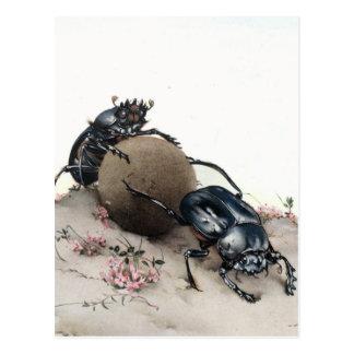 Dung Bettle Postcard