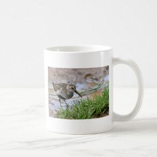 Dunlin against coloured water mug