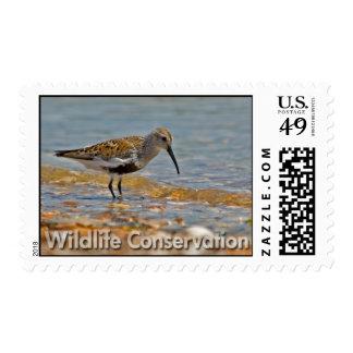 Dunlin Postage Stamp