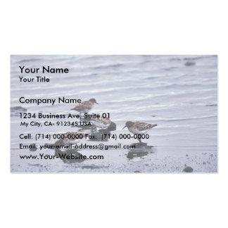 Dunlins en la línea de la playa plantillas de tarjetas de visita