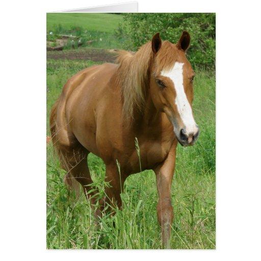Dunnit, cumpleaños del caballo tarjeta de felicitación