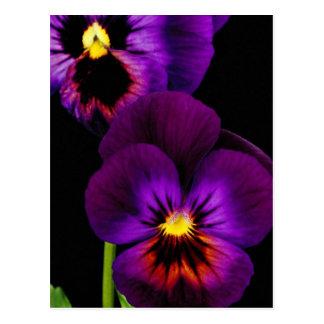 Dúo de los pensamientos púrpuras, flores de estado tarjetas postales