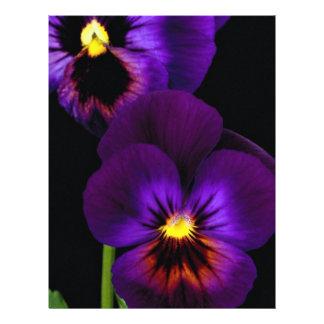 """Dúo de pensamientos púrpuras, estado de Washington Folleto 8.5"""" X 11"""""""