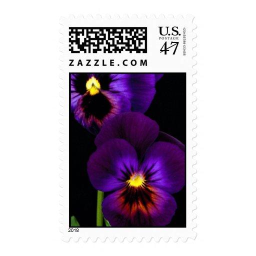 Dúo de pensamientos púrpuras, estado de Washington Sellos Postales