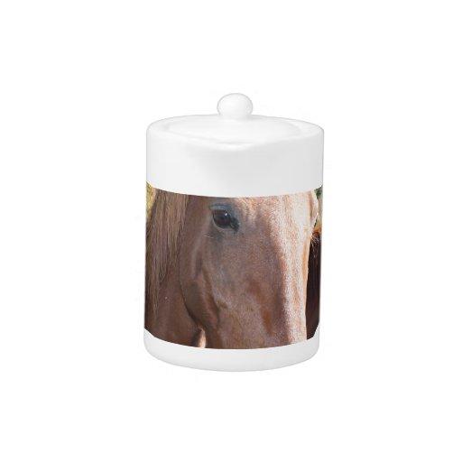 Dúo del caballo