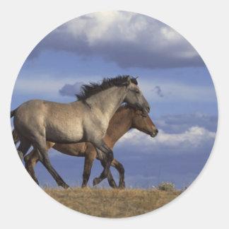 Dúo del caballo pegatinas redondas