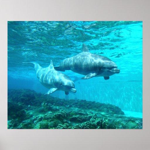 Dúo del delfín póster