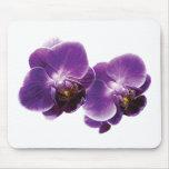 Dúo púrpura de la orquídea alfombrilla de ratón