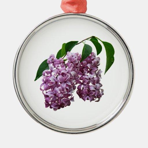 Dúo rosado de la lila ornamente de reyes