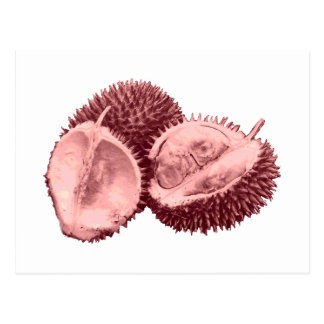 Durian Gift Idea... Or, for You. Whichever. Postcard