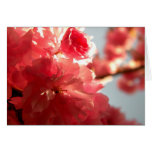 Dusk Blossoms Greeting Card