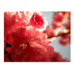 Dusk Blossoms Postcard